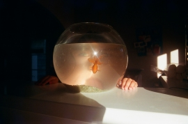 i took this photo of aurora on one of our first evenings. the light was shining really beautifully through their fish bowl and you can see aurora's eyes magnified through the water.
